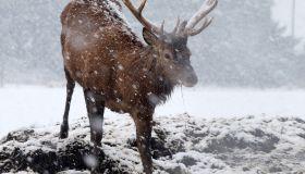 Heavy snow falls in West Lothian